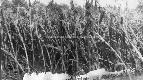 Archivio di Stato di Bergamo, Ispettorato provinciale dellalimentazione, Ispettorato provinciale dellagricoltura, Schedario fotografico dellex Servizio provinciale Foreste e Alimentazione, 4.4: Agricoltura - calamità, 1_4.4-015