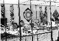 Archivio di Stato di Bergamo, Ispettorato provinciale dellalimentazione, Ispettorato provinciale dellagricoltura, Schedario fotografico dellex Servizio provinciale Foreste e Alimentazione (1961/1983),1.1: Attività di economia domestica rurale, ---, 2_1.1-074