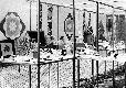 Archivio di Stato di Bergamo, Ispettorato provinciale dellalimentazione, Ispettorato provinciale dellagricoltura, Schedario fotografico dellex Servizio provinciale Foreste e Alimentazione (1961/1983),1.1: Attività di economia domestica rurale, ---, 2_1.1-075