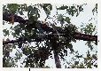 Archivio di Stato di Bergamo, Ispettorato provinciale dellalimentazione, Ispettorato provinciale dellagricoltura, Schedario fotografico dellex Servizio provinciale Foreste e Alimentazione (1961/1983),2: Gite distruzione, Gita nel Chianti, 2_2-127