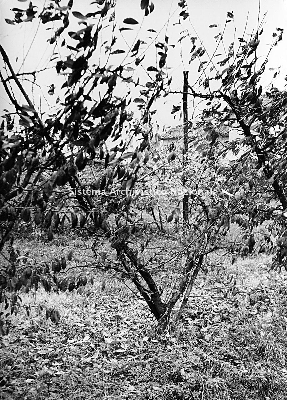 Archivio di Stato di Bergamo, Ispettorato provinciale dell'alimentazione, Ispettorato provinciale dell'agricoltura, Schedario fotografico dell'ex Servizio provinciale Foreste e Alimentazione (1961/1983),4.1: Agricoltura - aziende, Azienda Grandi, 2_4.1-182