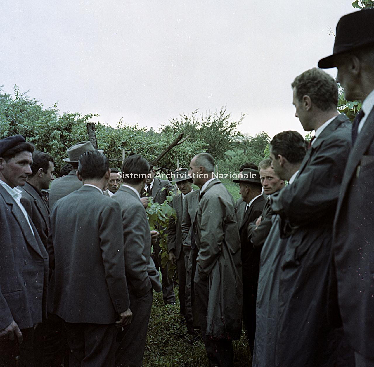 Archivio di Stato di Bergamo, Ispettorato provinciale dell'alimentazione, Ispettorato provinciale dell'agricoltura, Schedario fotografico dell'ex Servizio provinciale Foreste e Alimentazione (1961/1983),4.2: Agricoltura - viticoltura, ---, 2_4.2-015