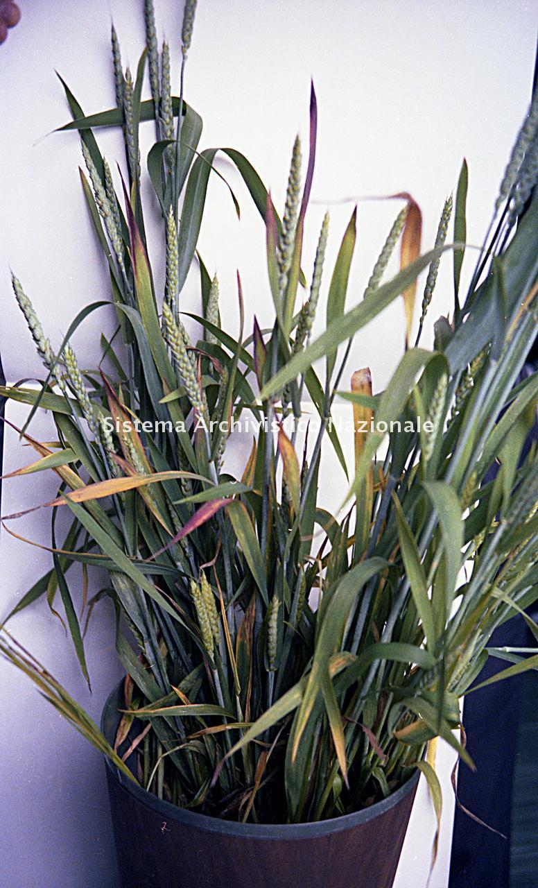 Archivio di Stato di Bergamo, Ispettorato provinciale dell'alimentazione, Ispettorato provinciale dell'agricoltura, Schedario fotografico dell'ex Servizio provinciale Foreste e Alimentazione (1961/1983),4.3: Agricoltura - calamità, ---, 2_4.3-037