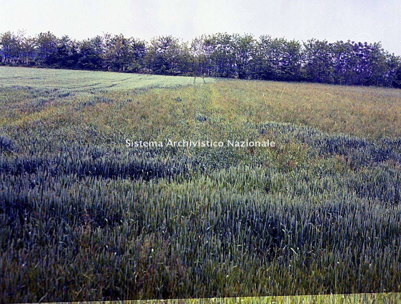Archivio di Stato di Bergamo, Ispettorato provinciale dell'alimentazione, Ispettorato provinciale dell'agricoltura, Schedario fotografico dell'ex Servizio provinciale Foreste e Alimentazione (1961/1983),4.3: Agricoltura - calamità, ---, 2_4.3-042