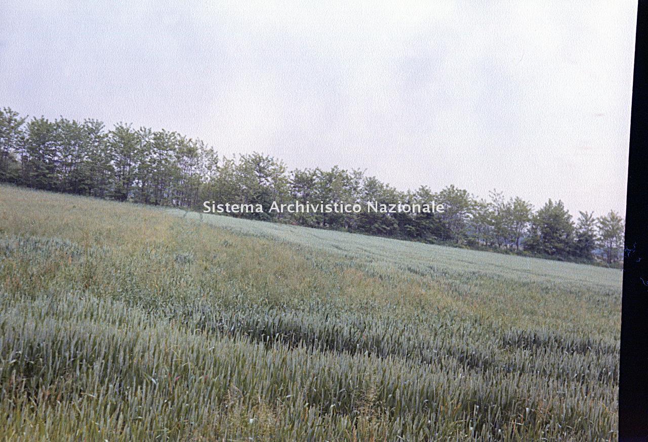 Archivio di Stato di Bergamo, Ispettorato provinciale dell'alimentazione, Ispettorato provinciale dell'agricoltura, Schedario fotografico dell'ex Servizio provinciale Foreste e Alimentazione (1961/1983),4.3: Agricoltura - calamità, Az. Terzi, 2_4.3-068