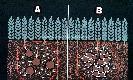 Archivio di Stato di Bergamo, Ispettorato provinciale dellalimentazione, Ispettorato provinciale dellagricoltura, Schedario fotografico dellex Servizio provinciale Foreste e Alimentazione (1961/1983),6: Réclame , Az. fertilizzanti Kali (Hannover), 2_6-033