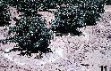 Archivio di Stato di Bergamo, Ispettorato provinciale dellalimentazione, Ispettorato provinciale dellagricoltura, Schedario fotografico dellex Servizio provinciale Foreste e Alimentazione (1961/1983),6: Réclame , Az. fertilizzanti Kali (Hannover), 2_6-035